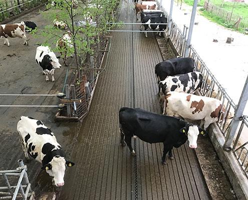 nachhaltigkeit-milchwirtschaft