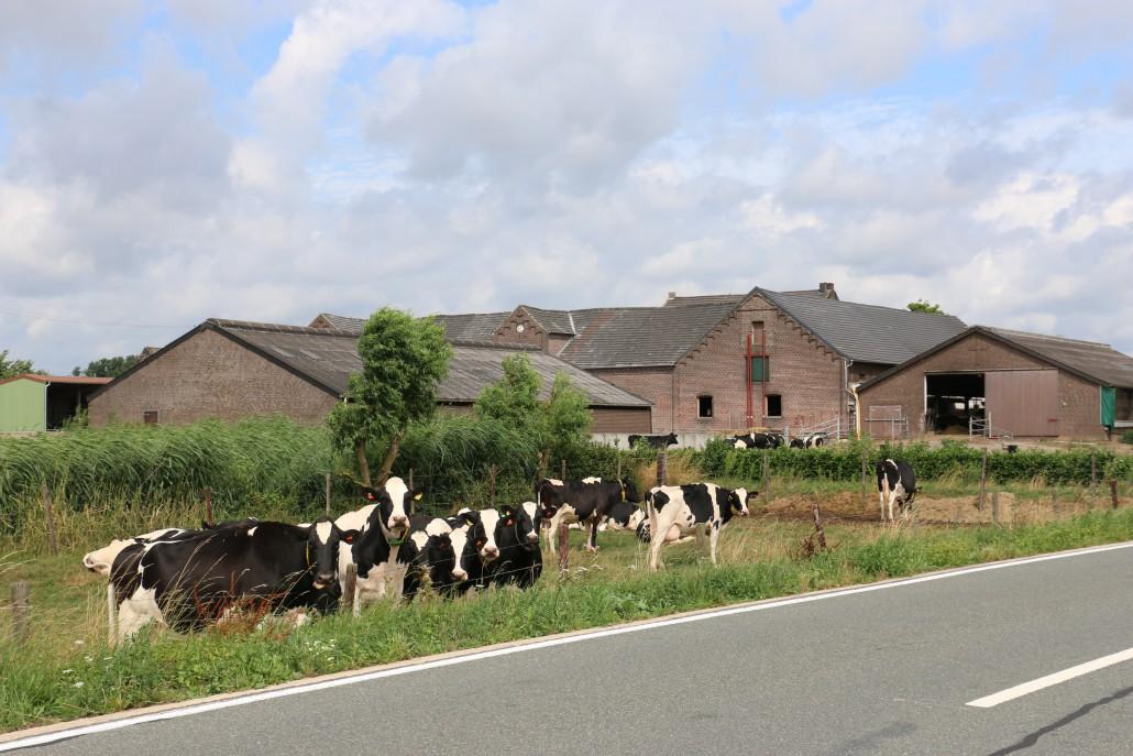 Milchvieh auf der Weide (Quelle: LVN NRW)