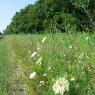 biodiversitaet_massnahmen